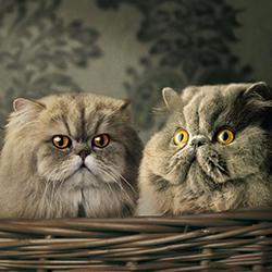 funny-cat-blog