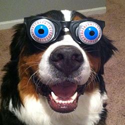 funny dog blog